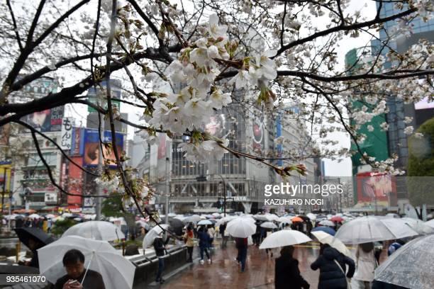 Pedestrians cross a street under cherry blossoms as it snows in Tokyo on March 21 2018 / AFP PHOTO / Kazuhiro NOGI