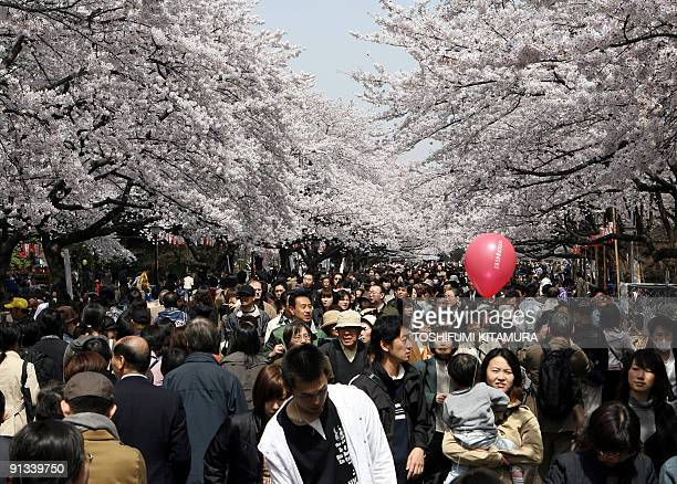 Pedestrians crowd under the cherry blossom trees at the Ueno park in central Tokyo, 01 April 2006. Huge crowds traditionaly gather to admire the...