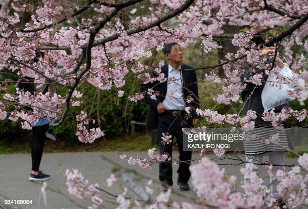 Pedestrians stroll beside the early blooming cherry blossoms in Tokyo on March 19 2018 Spring officially arrived in Tokyo on March 17 as Japan's...
