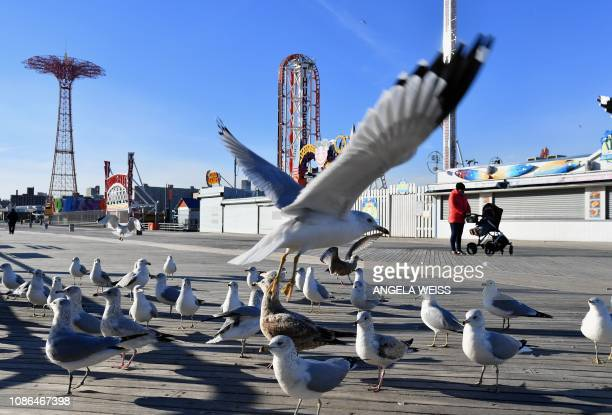 Pedestrians watch seagulls on the Coney Island Boardwalk on a cold winter day in New York on January 22 2019 The hight temperature in New York was...
