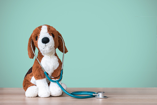 Pediatric doctor for children medical healthcare and child nursing care with dog toy, stethoscope and blank blackboard copy space on clinical  pediatrician's work table in hospital 1010980448
