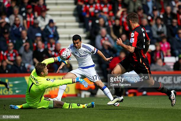 Pedro of Chelsea scores past Artur Boruc of Bournemouth to open the scoring during the Barclays Premier League match between AFC Bournemouth and...