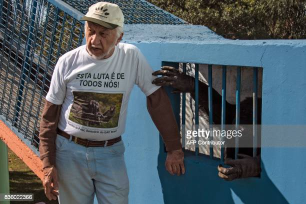 Pedro Ynterian President of the Great Apes Project remains next to a chimpanzee at a sanctuary for apes in Sorocaba some 100km west of Sao Paulo...
