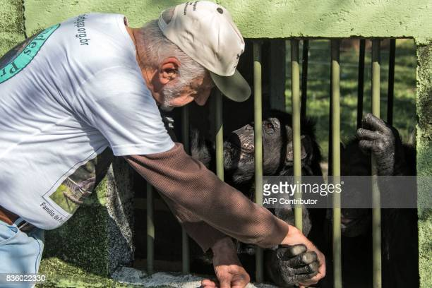 Pedro Ynterian President of the Great Apes Project shakes hands with a chimpanzee in a sanctuary for apes in Sorocaba some 100km west of Sao Paulo...