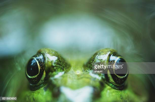 peekaboo frog - animal eye stock pictures, royalty-free photos & images