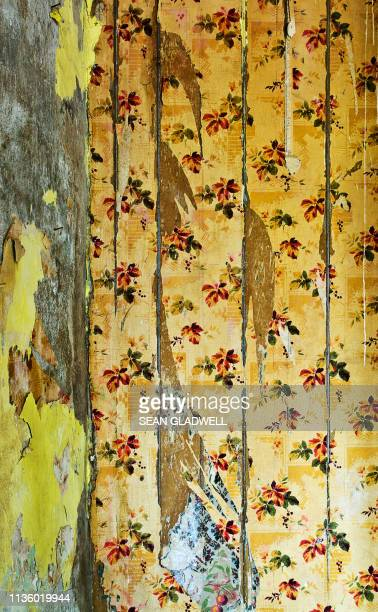 peeling wallpaper - chipping stock pictures, royalty-free photos & images