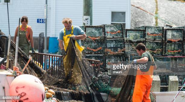peggy's cove fishermen - lobster fishing stock photos and pictures