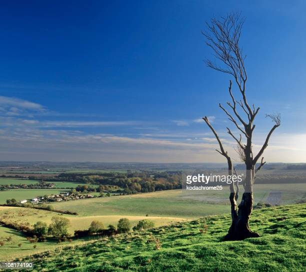 pegston hills - bedfordshire stock photos and pictures