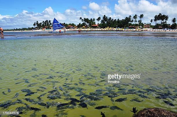 peixes nas piscinas de porto de galinhas - porto galinhas stock photos and pictures
