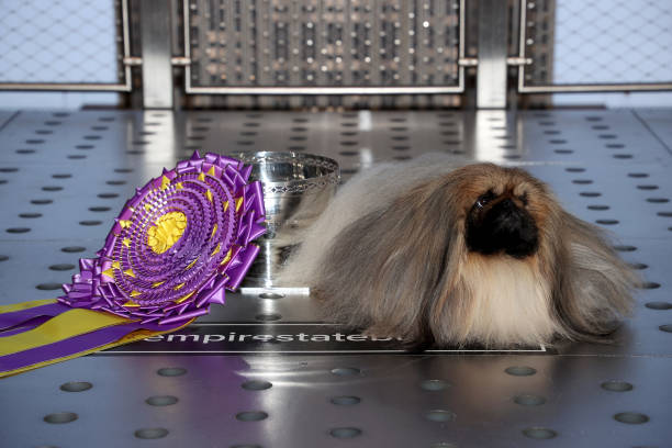 NY: Empire State Building To Host The Best In Show Winner Of The 145th Westminster Kennel Club Dog Show