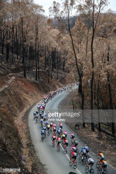 Peleton riding through forest devastated by fire on Fox Creek Road at Subaru Stage 3 from Unley to Paracombe of the 22nd Santos Tour Down Under on...