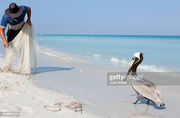 Pelican in front of fisherman at seashore