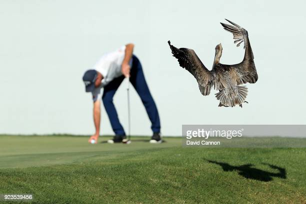 A pelican lands near to Jim Furyk of the United States on teh 16th green during the second round of the 2018 Honda Classic on The Champions Course at...