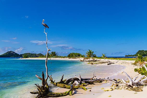 Pelican on Sandy Island, Grenada
