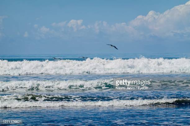 pelican over the waves blue sky - naomi jarvis stock pictures, royalty-free photos & images