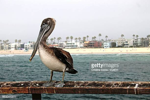 Pelican Perching On Railing By River Against Clear Sky