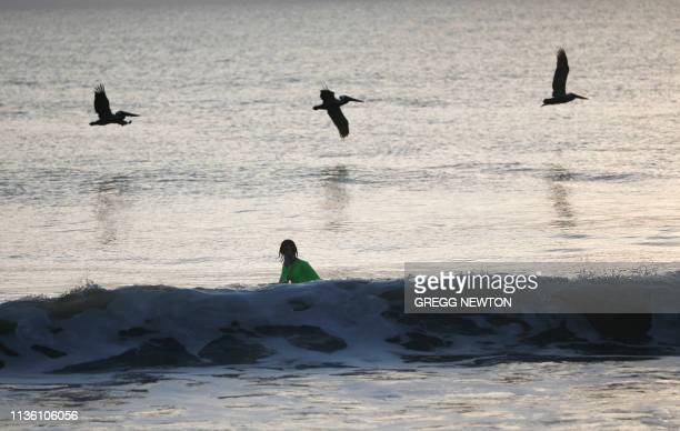 Pelicans fly over a youth swimming at Playalinda Beach just north of the Kennedy Space Center in Florida on April 10 2019 Visitors lined up to enter...