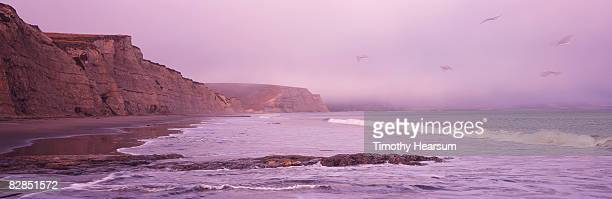 pelicans in flight over drake's beach at sunset - timothy hearsum stock photos and pictures