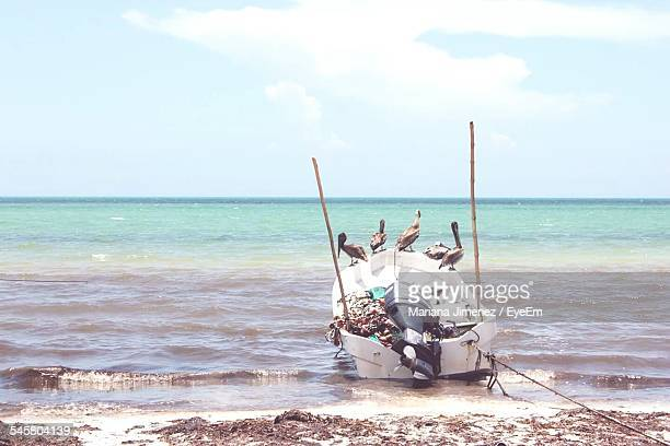Pelicans Perching On Boat At Sea Shore Against Sky