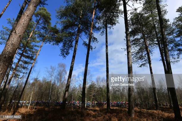 Peloton / Forest / Landscape / during the 77th Paris Nice 2019 Stage 1 a 1385km from Saint Germain en Laye to Saint Germain en Laye / PN / @ParisNice...