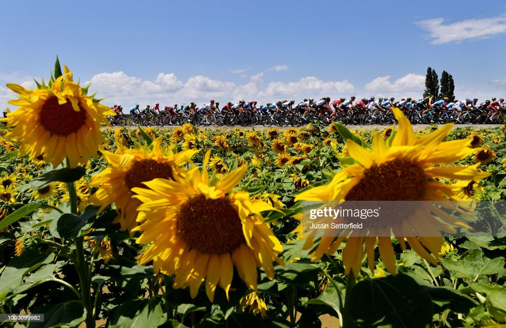Peloton / Sunflowers / Landscape / during the 105th Tour de France 2018, Stage 14 a 188km stage from Saint-Paul-Trois-Chateaux to Mende 1030m / TDF / on July 21, 2018 in Mende, France.