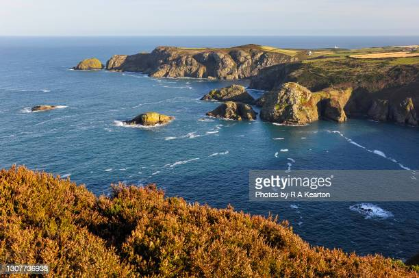 pembrokeshire coast at pwll deri - wales stock pictures, royalty-free photos & images