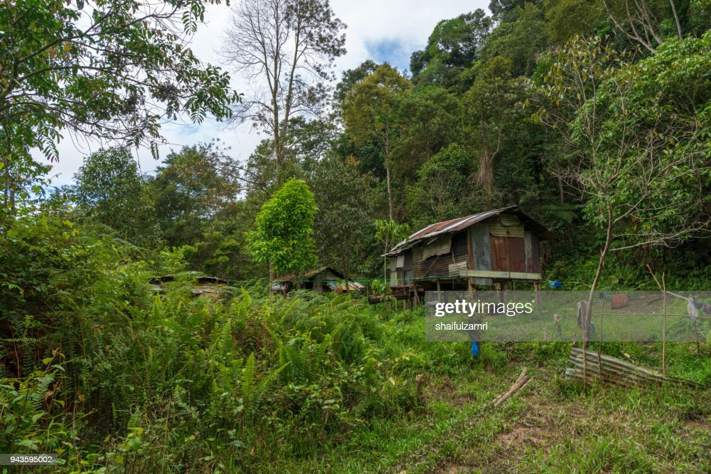 Penan hut reflects the simplicity of the Penan tribe that lives in the forest of Sarawak. : Stock Photo
