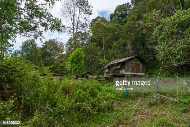 penan hut reflects the simplicity of the penan tribe that lives in the forest of sarawak. - shaifulzamri stockfoto's en -beelden