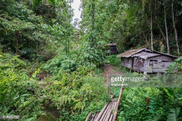 penan settlement in bario, the penan are a nomadic indigenous people living in sarawak. they have lived in harmony with the rain forest, with its fast-flowing rivers and twisting networks of limestone caves, for thousands of years. - shaifulzamri imagens e fotografias de stock