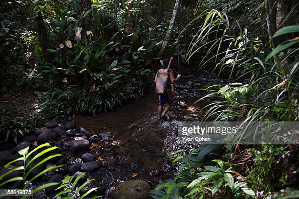 Penan tribesman Bala walks through the forest close to the village of Long Napir in Sarawak He is holding a traditional spear and blow pipe which he...