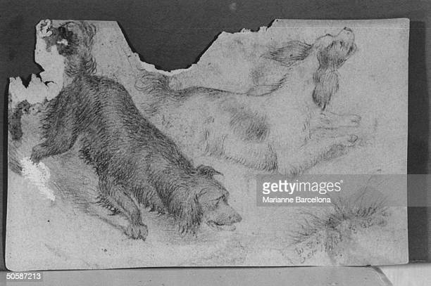 Pencil drawing of two dogs done by Gen William Tecumseh Sherman of Civil War fame at age 18 in collection of greatgrandson William T Hamlen