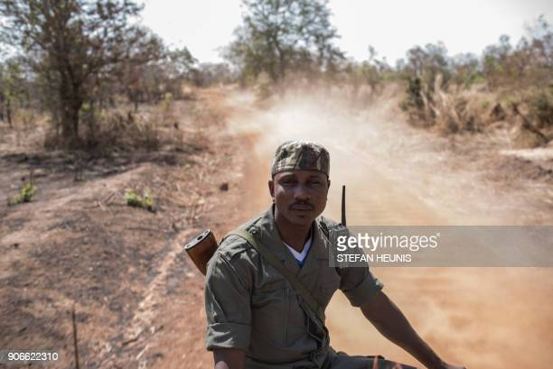 A Pendjari National Park ranger sits on the back of a vehicle during an elephant collaring exercise at Pendjari National Park near Tanguieta on...