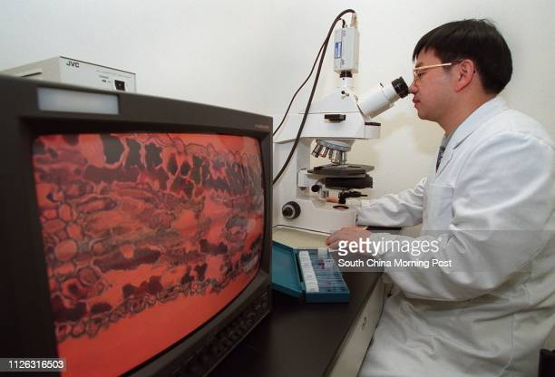 Peng Yong from Beijing a year one undergratulate with the School of Chinese Medicine the Hong Kong Baptist University studies a 200X microscopic...