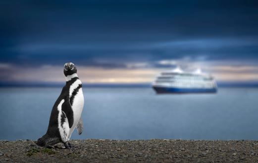 Penguin and Cruise Ship in Patagonia. Awe inspiring travel image. 481507431