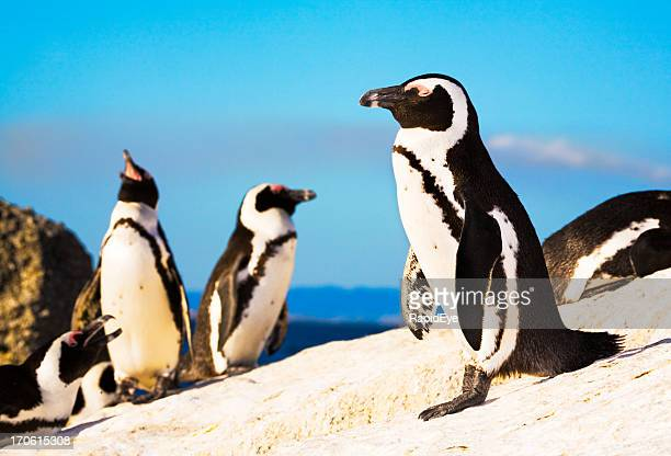 penguin colony - pinguïn stockfoto's en -beelden