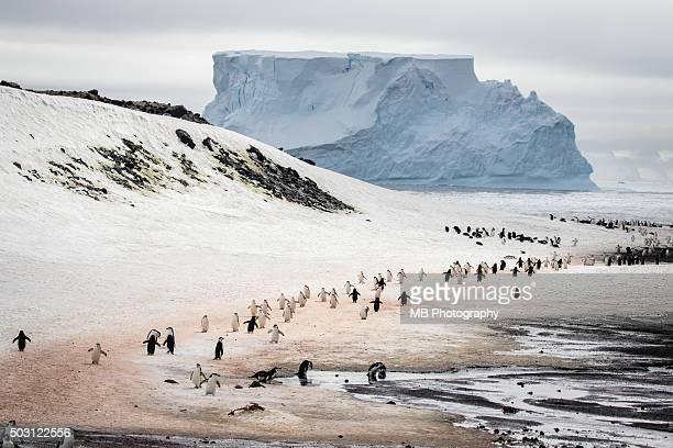 penguin highway - cacca foto e immagini stock