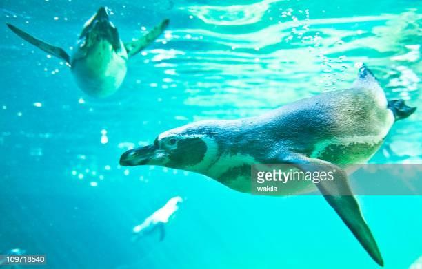 Penguin in sunny water ocean underwater