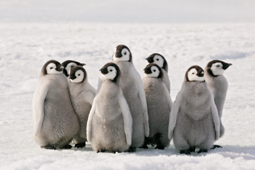 Penguin Party 157648146
