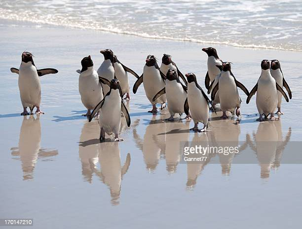 penguin reflections, falkland islands - rockhopper penguin stock pictures, royalty-free photos & images
