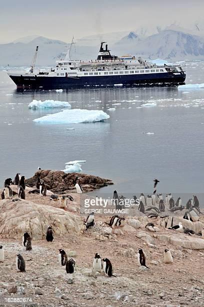 Penguin rookery in Neko harbour. Antarctic peninsula cruise aboard the Lyubov Orlova, Feb. 2010