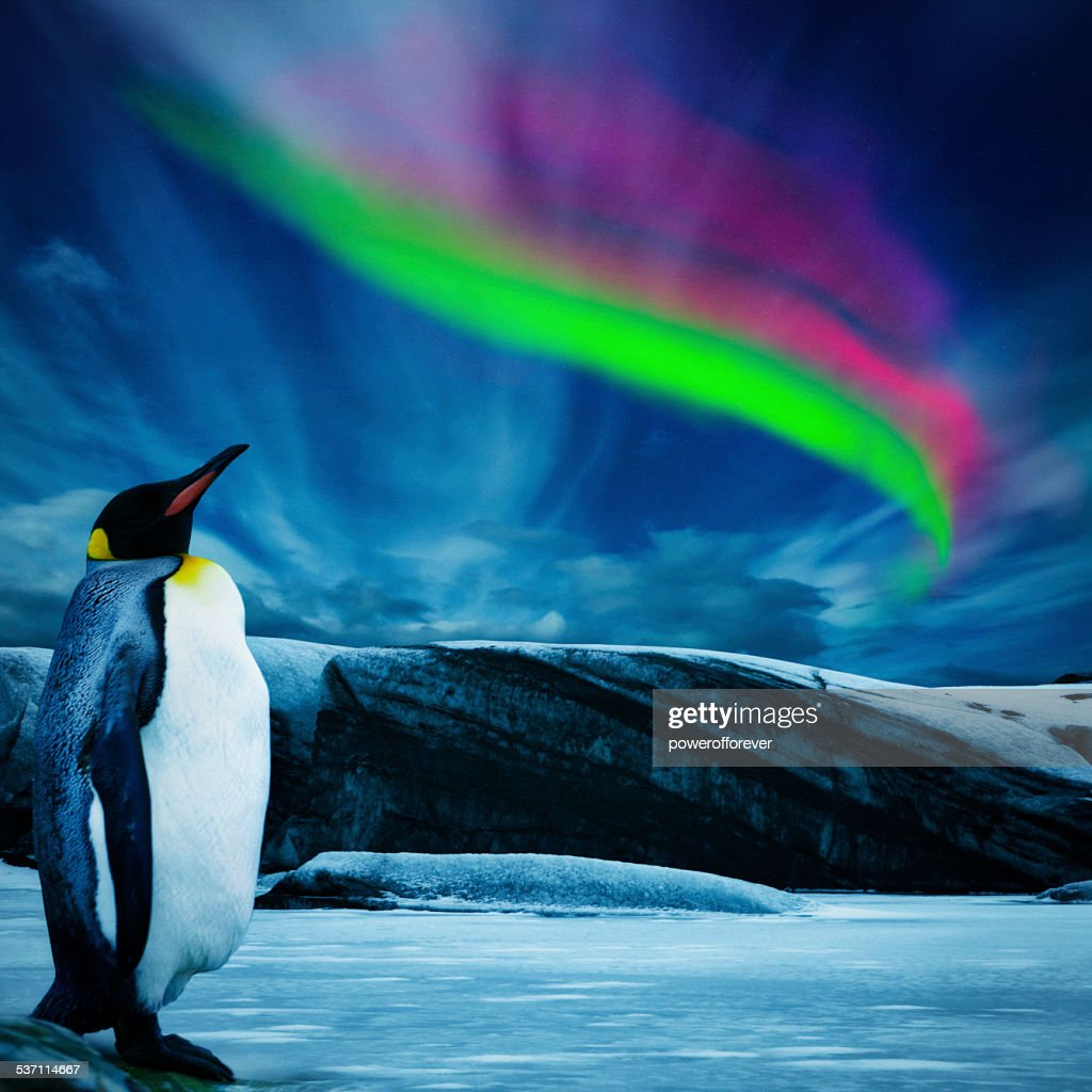 Penguin Under Southern Lights : Stock Photo