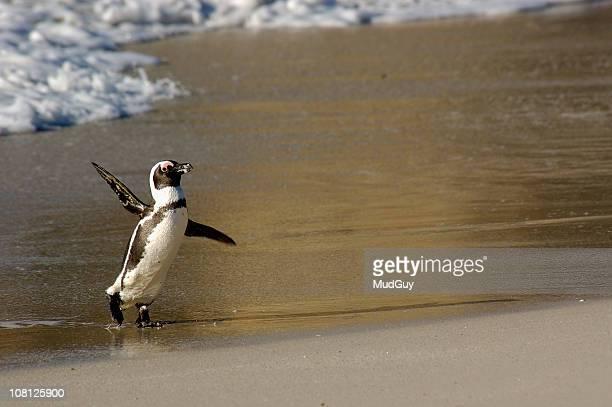 Penguin zu Fuß am Strand