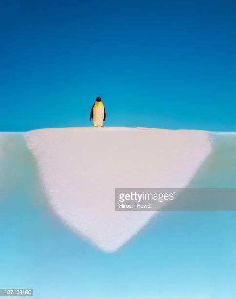 penguin walking on melting glacier - klimaschutz stock-fotos und bilder
