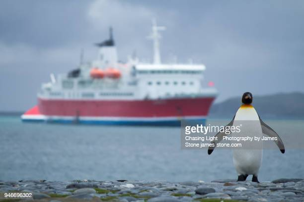 Penguin with Antacrtic Cruise ship in background