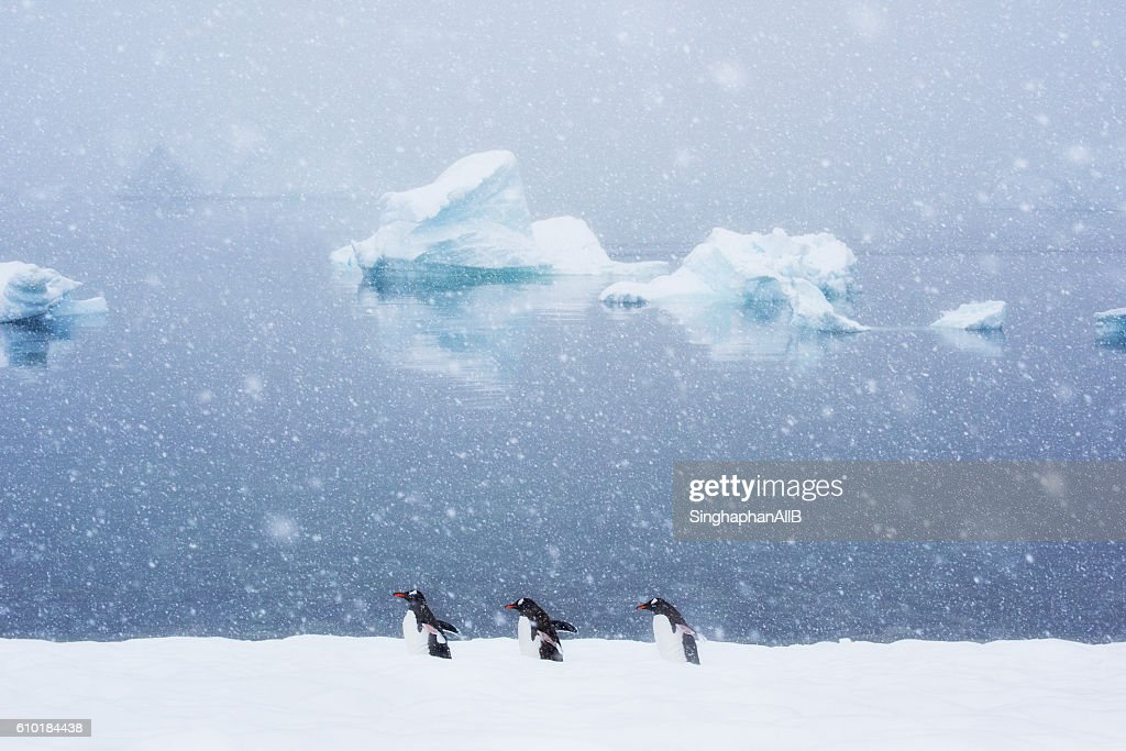 penguins and friends : Stock-Foto