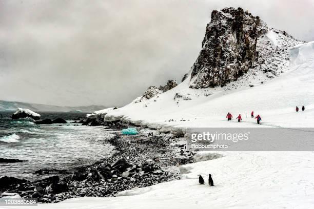 ハーフムーン島、南シェトランド諸島の氷の上を歩くペンギンと人々 - 南極海 ストックフォトと画像