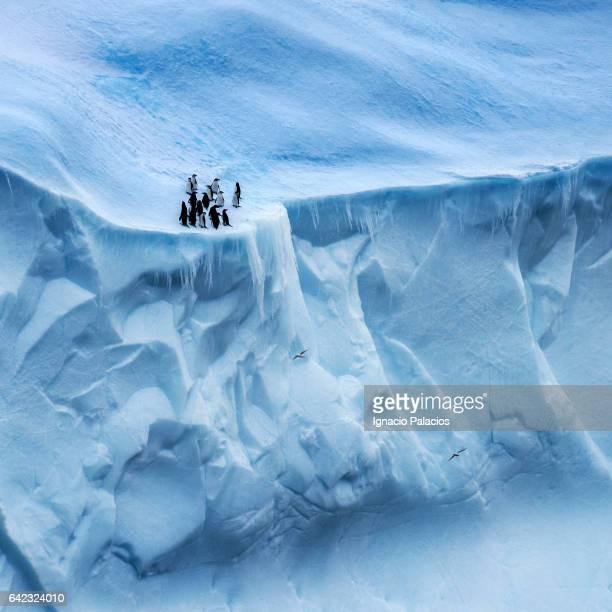 Penguins and petrels on top of a glacier, Antarctica