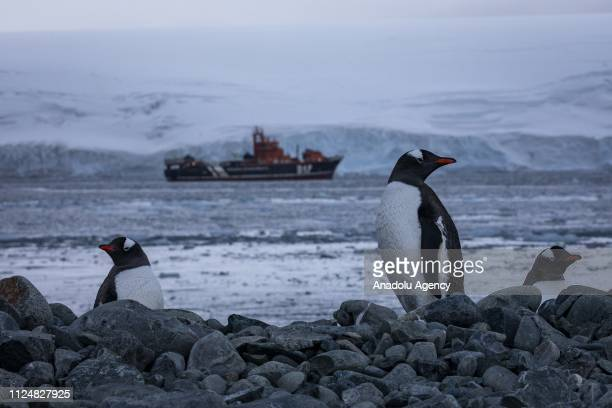 Penguins are seen walking in the north of Antarctic Peninsula on February 07 2019 in Antarctica Turkey organized National Science Antarctica...