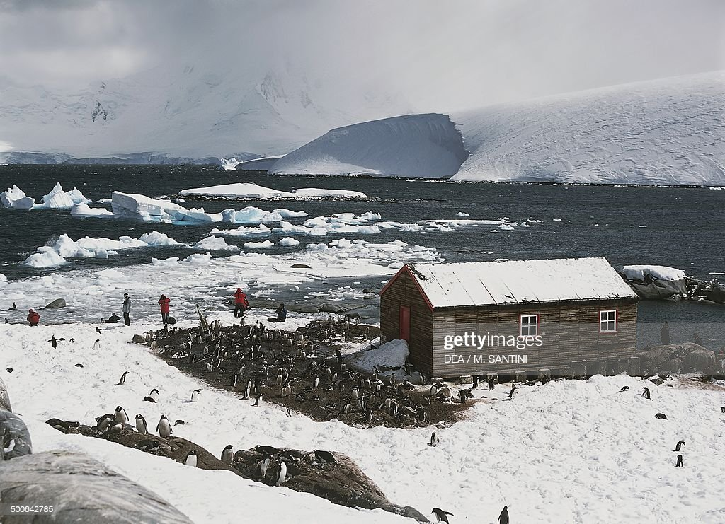 Penguins around old British base of Port Lockroy : News Photo