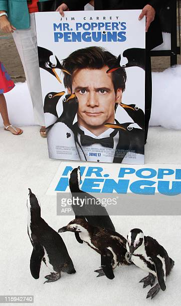 Penguins arrive at the Premiere of 20th Century Fox Mr Popper's Penguins in Hollywood California on June 12 2011 AFP PHOTO/VALERIE MACON